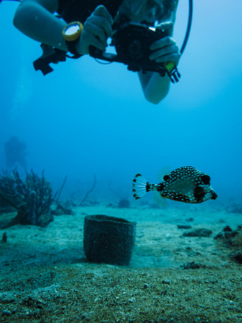 Dive into a Marine Biologist Career at Community College ...